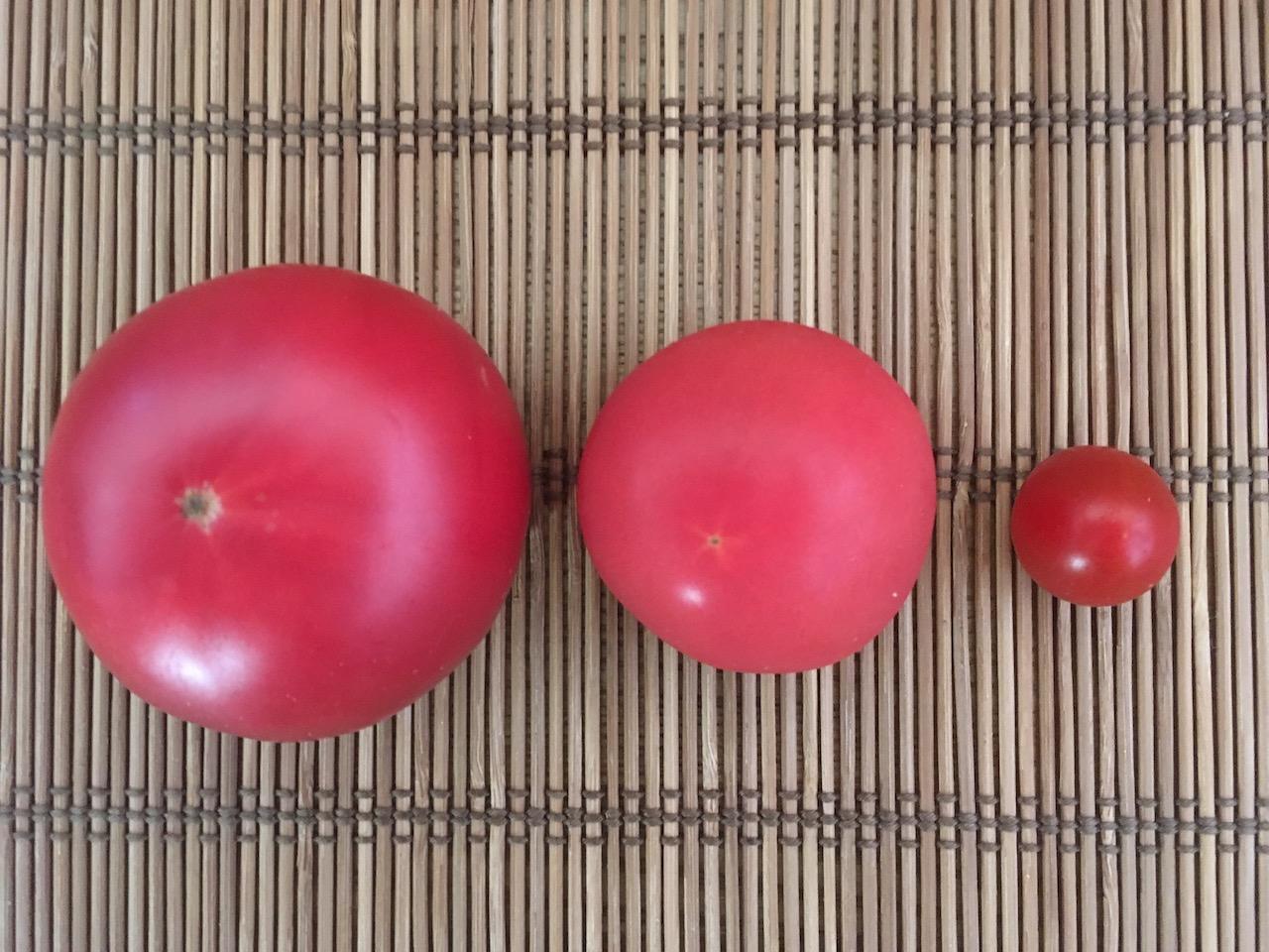 大きさの違う3つのトマト