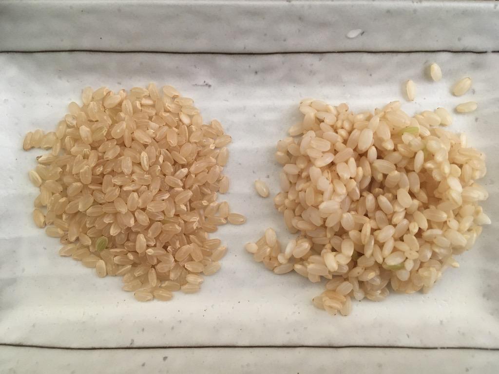 水に24時間浸した玄米